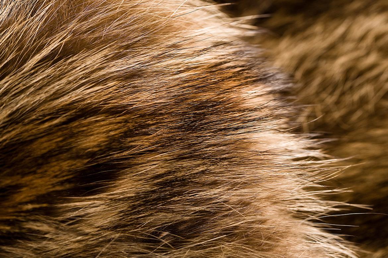 """""""Fur""""/"""